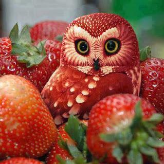 Fruit owl art..水果猫头鹰艺术..