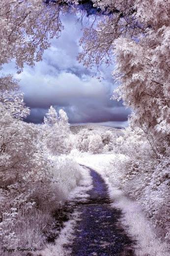 Invierno hermoso 创意摄影
