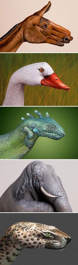水彩动物头像设计