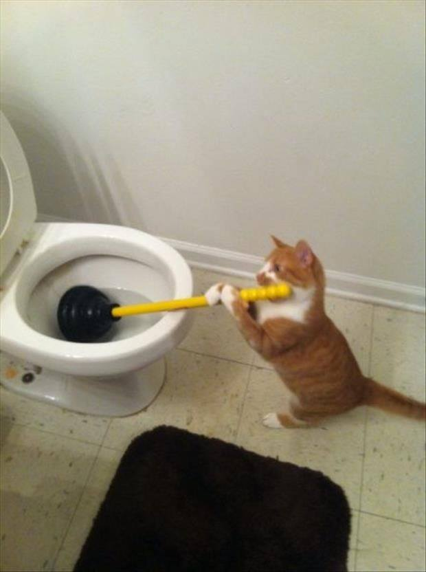 The cat in the toilet。猫在洗马桶