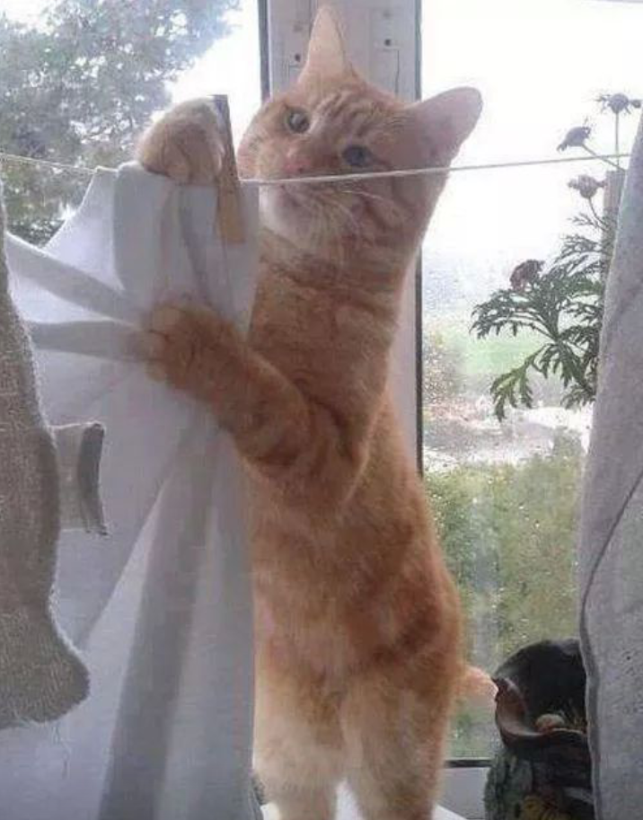 The cat in the cool wallpaper 猫在凉桌布
