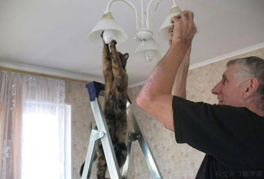 The cat in the changing light bulbs。猫在换灯泡
