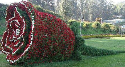 Amazing Creativity dfgfd 惊人的创造力,花园艺术