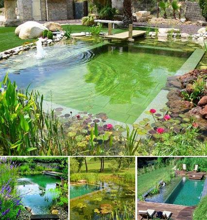 Amazing Green Pool.奇异的绿色池。