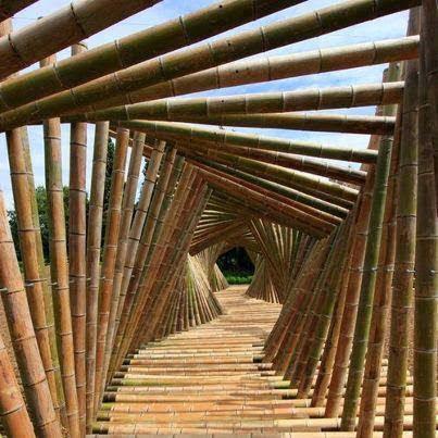 Bamboo Tunnel, Kyoto, Japan !!日本东京的竹隧道!
