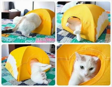Cat Tent Using An Old T-Shirt.猫帐篷使用旧的T恤。