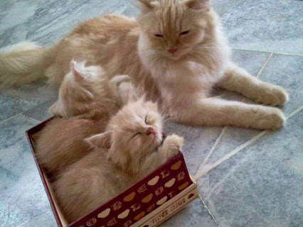 Happiness in a box ♥把小猫咪装在一个盒子里♥幸福