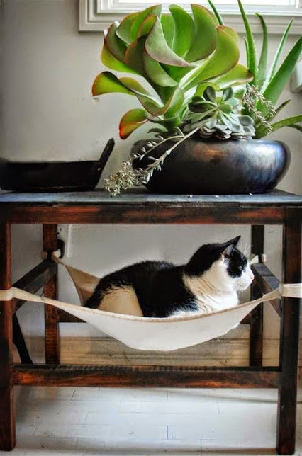 Beautiful bonsai, cat bed 漂亮盆景,猫咪的床