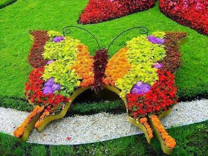Love it!爱它!蝴蝶花圃。