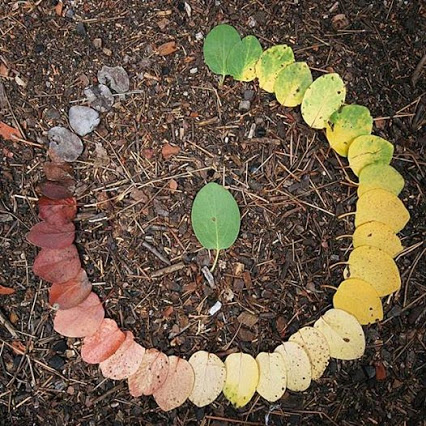 The life cycle of a leaf by Rob Herr.罗伯先生的叶子的生命周期。