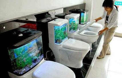 Toilet Aquariums.厕所水族馆。
