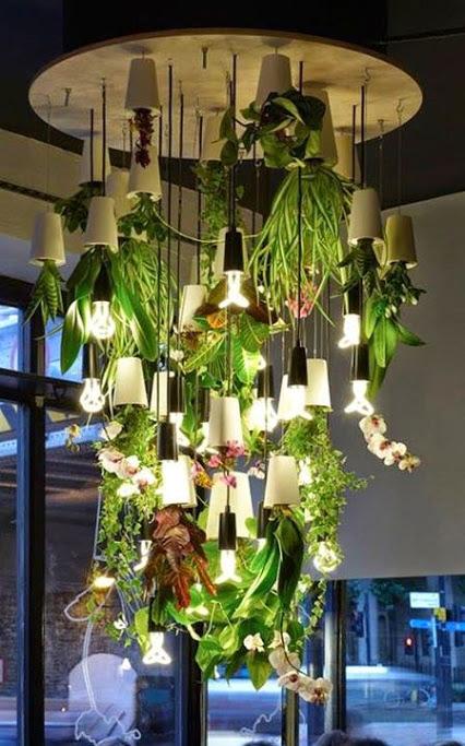 Upside Down Indoor Plants.颠倒的室内植物