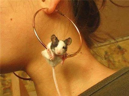 awwww..cute可爱的耳环