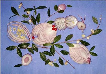 Onion Art.洋葱的艺术。